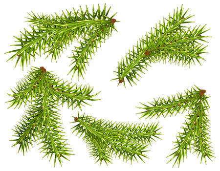 Set green fir pine branch symbol new year and christmas. Vector illustration isolated on white
