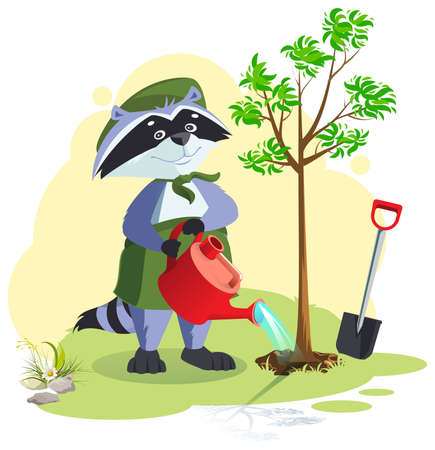 Scout planting and watering tree. Boy scout raccoon care for nature. Vector cartoon illustration