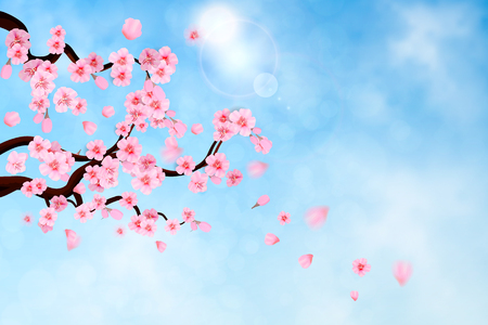 Pink cherry blossom with falling leaves on blue sky background. Spring composition with sakura. Vector illustration 向量圖像