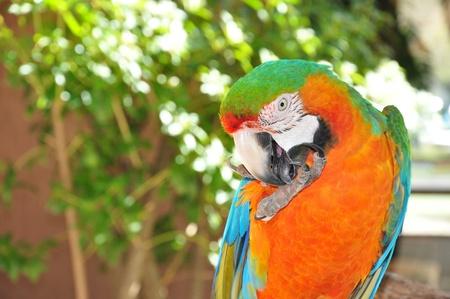 catalina: Catalina Macaw Parrot Stock Photo