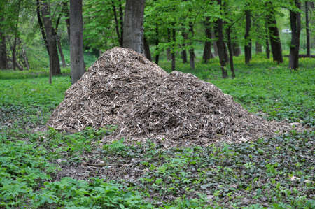 Shredded branches of trees and shrubs, used for heating
