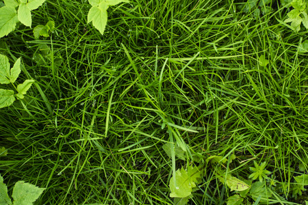 uncultivated: Green tropical grass