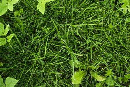 Green tropical grass