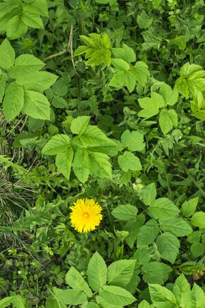ranges: Green tropical leaves with yellow flower
