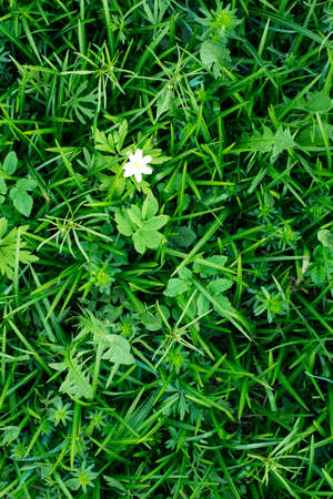 ranges: Green tropical leaves with white flower