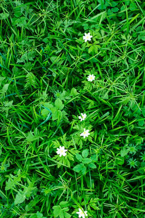 ranges: Green tropical leaves with white flowers