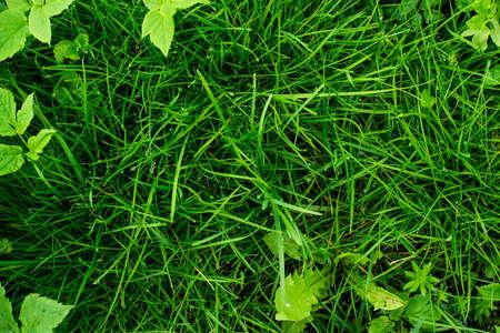 ranges: Green tropical grass