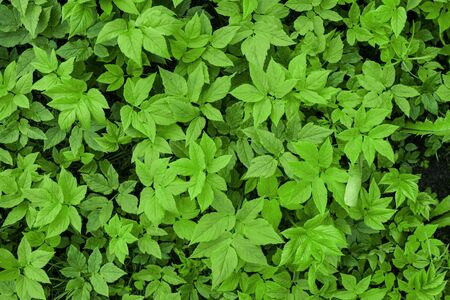 Green tropical leaves Stock Photo