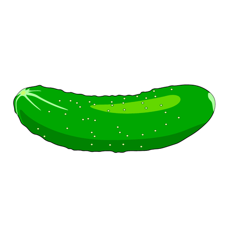 Cucumber on white background - Vector