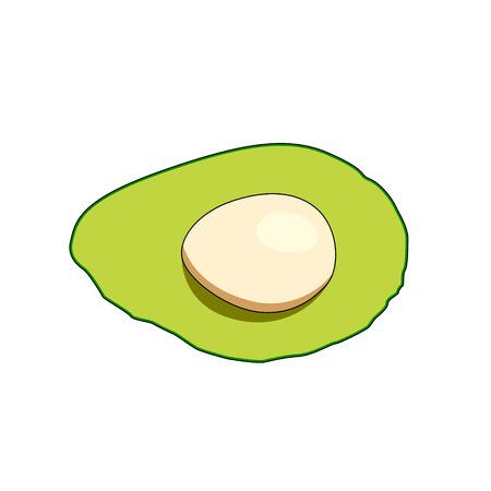 Sliced avocado on white background - Vector
