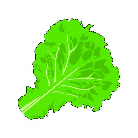 Salad, letucce leaf on white background - Vector Stock Illustratie