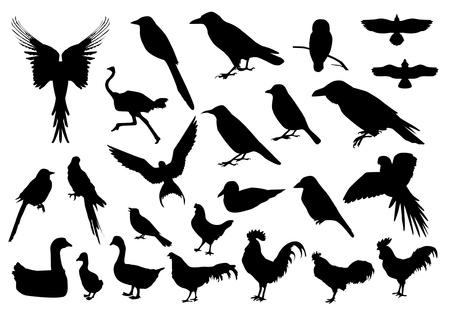 ruiseñor: Siluetas de los pájaros Vectores