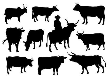 Stieren en koeien silhouetten