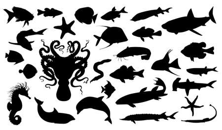 Aquatic life Vector