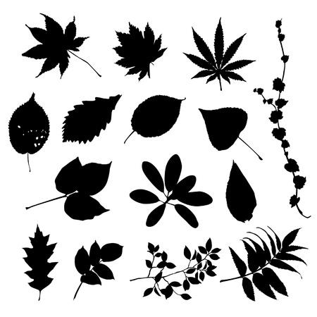 beech tree beech: Leaves silhouettes Illustration