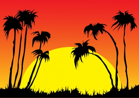 Sunset and palm trees Vector