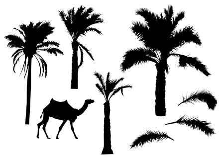 palm branch: Palm trees silhouettes