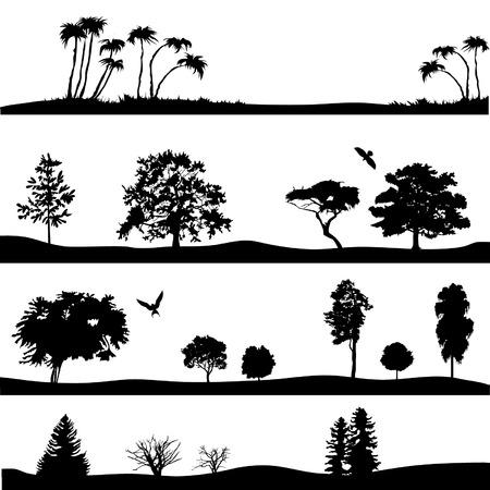 arbol alamo: Siluetas de �rboles Vectores