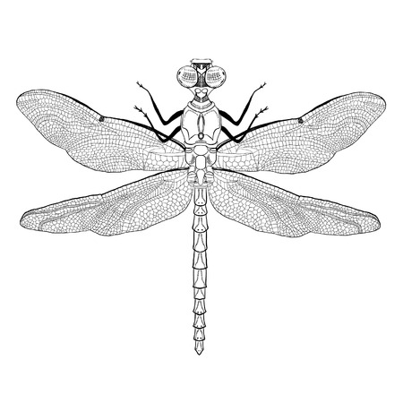 engraved image: Hand Drawn Dragonfly Illustration