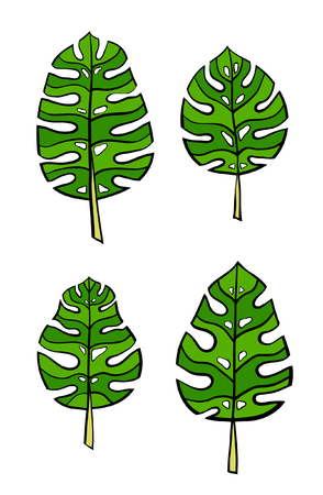 vegetate: Vector green leaves Illustration