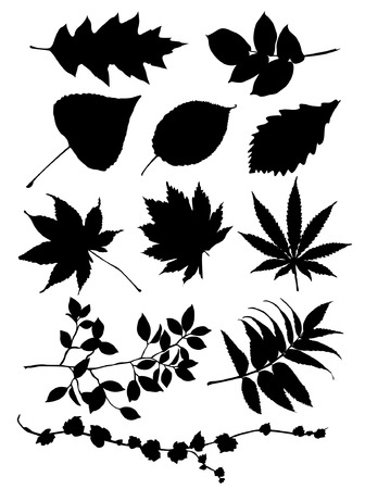 specimen: Leaves silhouettes Illustration