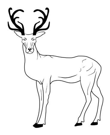 Hand drawn deer Illustration