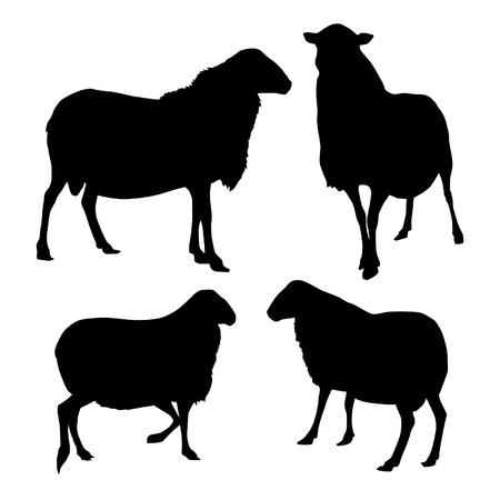 Four sheep silhouettes Illustration