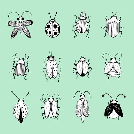 Boceto de insectos dibujados a mano. Diseño para broche decorativo artesanal. Ilustración de vector