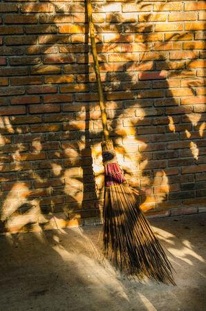 bamboo  bloom  brick wall