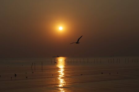 single seagull with sunset Imagens