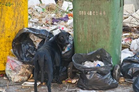 Abandoned dog eating garbage