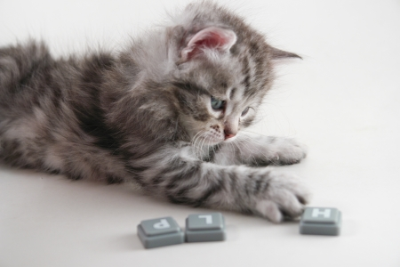 Kitten plays with letters Stock Photo - 9838698