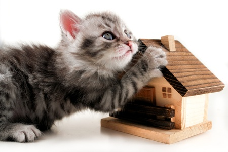 Kitten and house Stock Photo