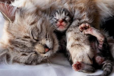 Cat and her newborn kitten Stock Photo - 9832066