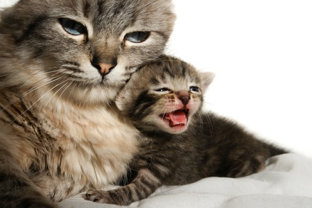furry animals: Cat and her newborn kitten