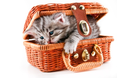 Kitten in basket - isolated