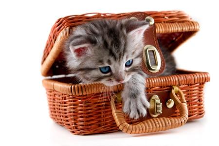 kotek: Kitten w koszyku - izolowane Zdjęcie Seryjne