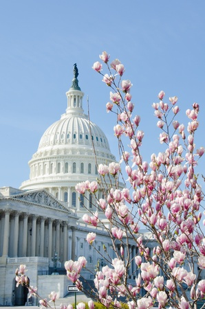 U.S. Capitol building in Washington DC - Spring time photo