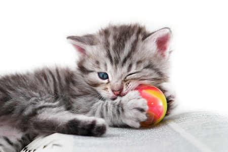 Kitten plays with a ball on a book - Isolated on white background