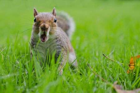 Cute squirrel astonished