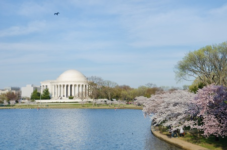 spring tide: Thomas Jefferson Memorial during cherry blossom festival in Washington DC United States