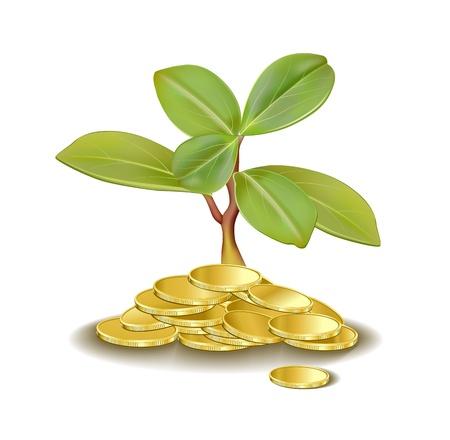 Geld Baum wächst aus goldenen Münzen Standard-Bild - 11408268