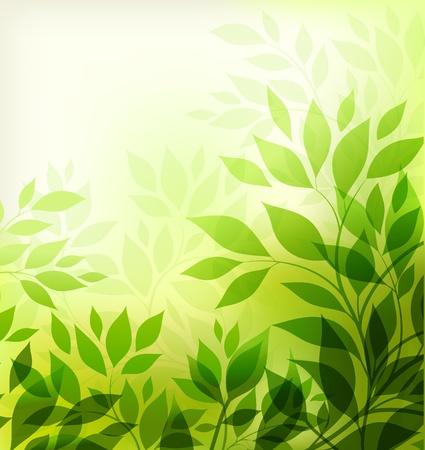 affluence: resumen de antecedentes con la hoja verde