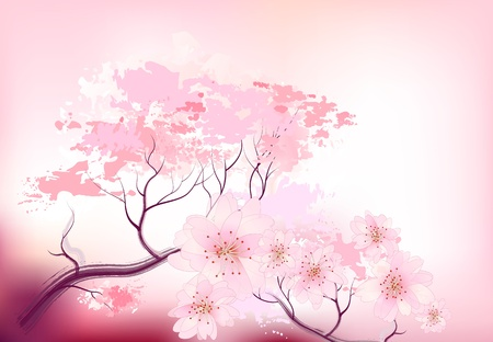cherry blossom tree: Beautiful sacura spring cherry tree branch in bloom with pink sky closeup - sketch