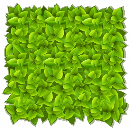 background of green leaves Stock Vector - 16551262