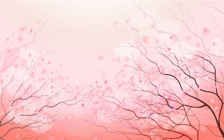 cherry blossom: Sakura branch, beautiful spring pink floral background