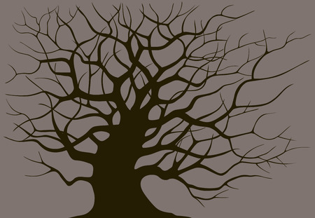 bare trees: Silhouette branching of an old tree on a dark background
