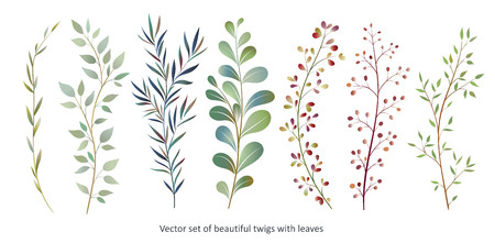 Handdrawn Vector Watercolour style, nature illustration. Set of  leaves and branches, Imitation of watercolor, isolated on white.  일러스트