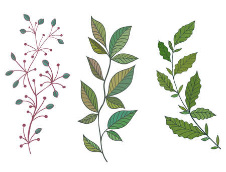 Set of beautiful and different twigs. Hand drawn vector illustration. Perfect for invitations