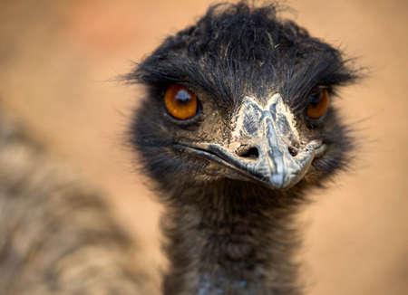 Ostrich portrait Imagens